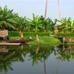 Kerala - back water